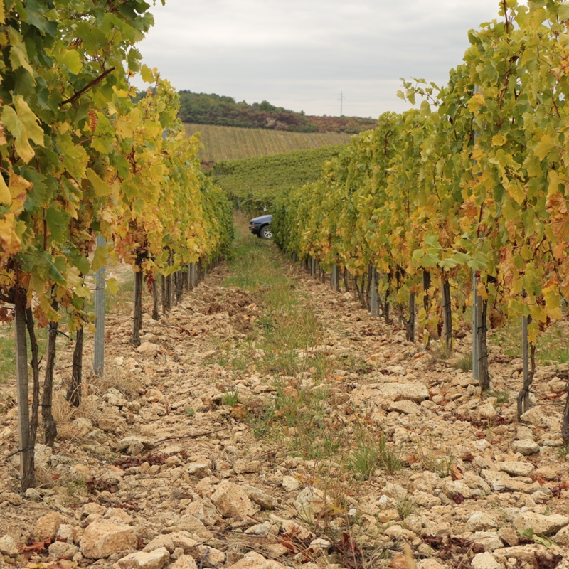 Szedmak Winery - the beginning