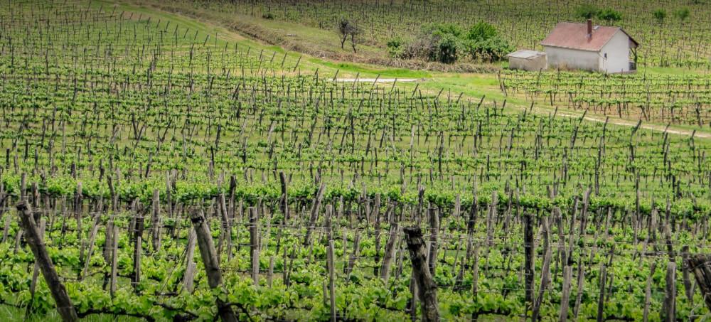 Tokaj winery